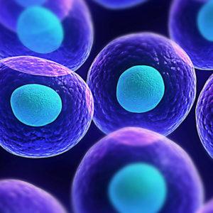 Ćelijske kulture