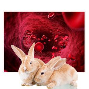Hematologija u veterini