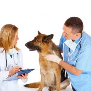 Dijagnostički testovi za veterinu